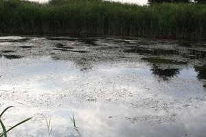 sandacz.info-2015-07-rewitalizacja-04